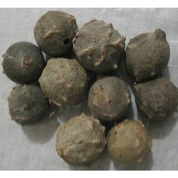 Best quality of Dyer's Oak (Quercus Infectoria Oliv) Gallnuts, Gall Oak / Gall Nut